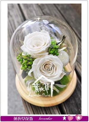 不凋花~鮮奶玫瑰~106070613