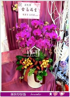 高雅蝴蝶蘭8株y34011