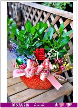 龍珠盆栽c090909