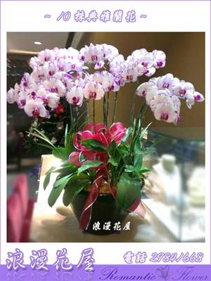 10株蝴蝶蘭 D90