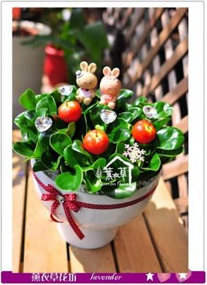 聚財樹盆栽c090122