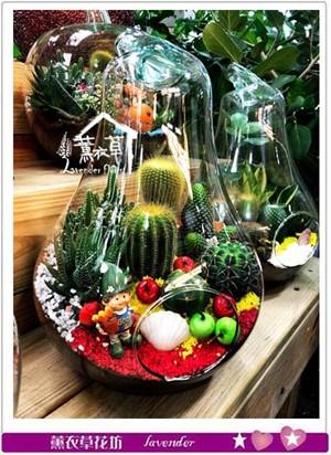 燈泡造型&仙人掌玻璃缸設計107052801