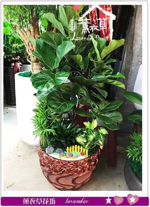 琴葉盆栽106050609