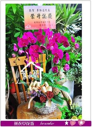 高雅蝴蝶蘭106071103