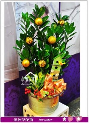 金錢樹盆栽a080317