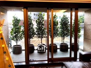 福木盆栽107041301