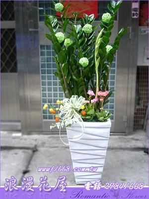 金錢樹盆栽 3-108