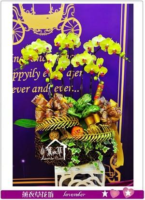 黃金蝴蝶蘭b013025