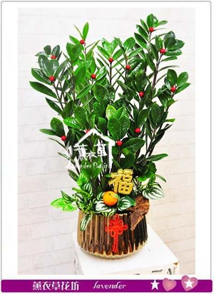 金錢樹盆栽 106080923