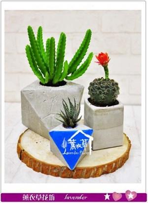 手作盆栽設計b072201