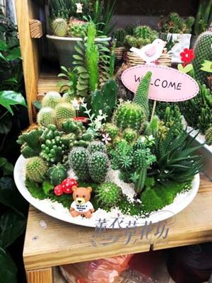 仙人掌植物設計 107101705