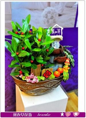 龍珠盆栽a011925