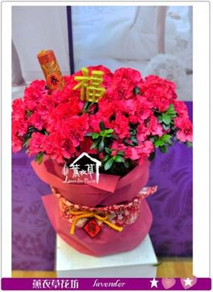 杜鵑花盆栽~新年款a020310