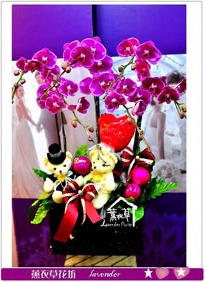 高雅蝴蝶蘭a011706