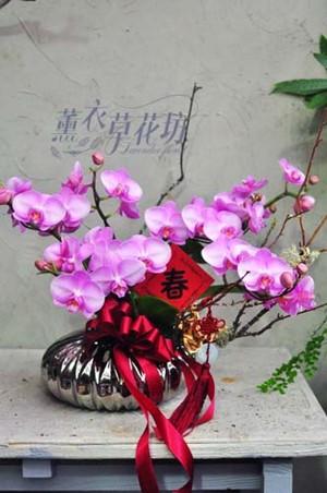 蝴蝶蘭/蘭花/設計 107011601