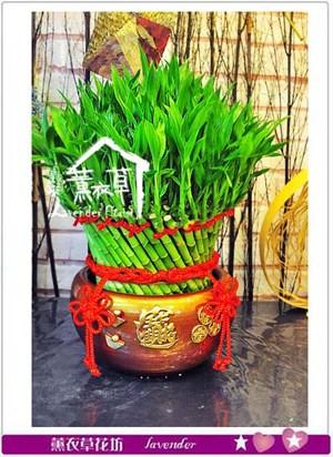 開運竹盆景 106091107