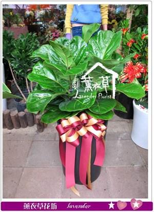 琴葉盆栽y344825