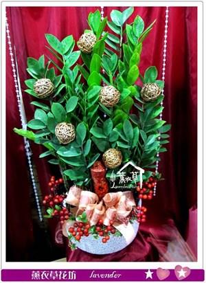 金錢樹盆栽c012018