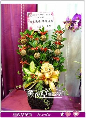 金錢樹盆栽y31638