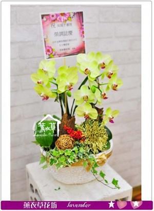 黃金蝴蝶蘭2朱b060103