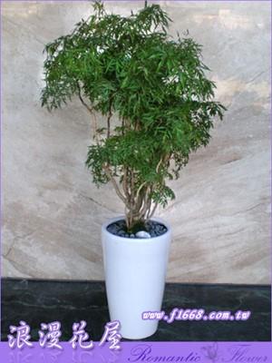 落地富貴樹盆栽3-75