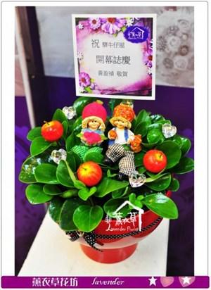 聚財樹盆栽c040217