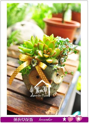 可愛多肉植物設計一組 107050206