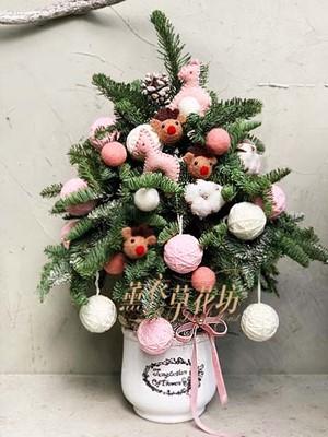 聖誕樹~諾貝松107120509