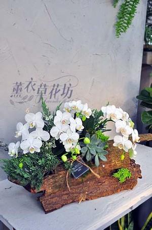蝴蝶蘭設計 107102906