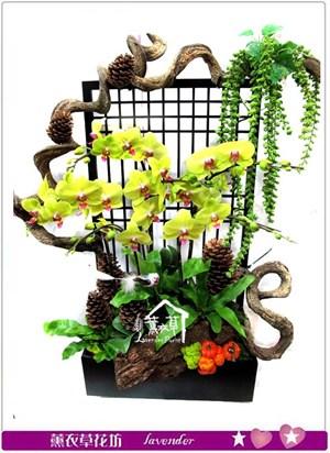 高雅蝴蝶蘭~<BR>日式花盆設計款c032018