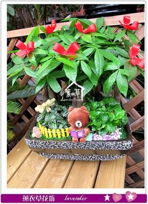 發財樹盆栽c062606
