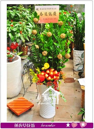 金錢樹盆栽y4073