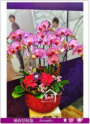 特及蝴蝶蘭禮盆a092014