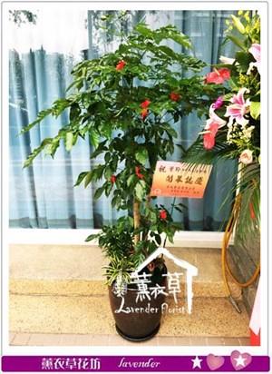 旺旺樹106062906