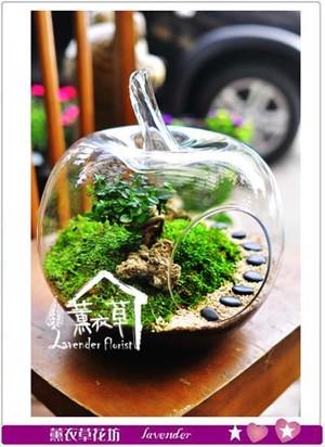 玻璃生態缸~蘋果款106020705  缺貨