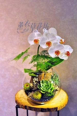 蝴蝶蘭&多肉植物&玻璃缸107102005