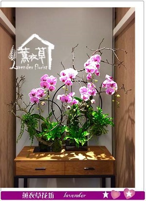 蝴蝶蘭設計 106120712