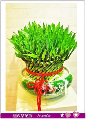 開運竹盆栽~106060707