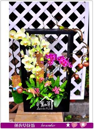 高雅蝴蝶蘭c091917