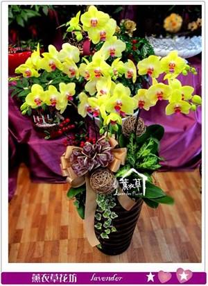 高雅蘭花設計c050222