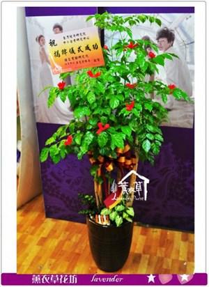旺旺樹~a071404