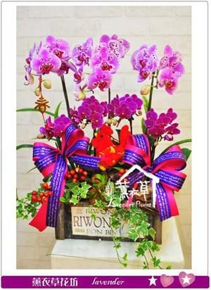 蝴蝶蘭 設計106010712
