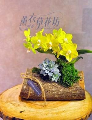 迷你蝴蝶蘭&樹頭設計 107050407