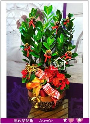 金錢樹盆栽c122625