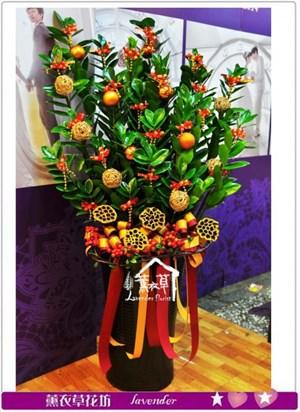 金錢樹盆栽a071909