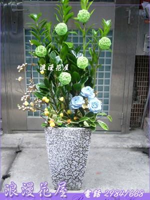 金錢樹盆栽 3-110