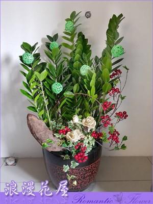 金錢樹盆栽3-132