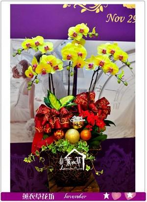 高雅黃金蝴蝶蘭c122414