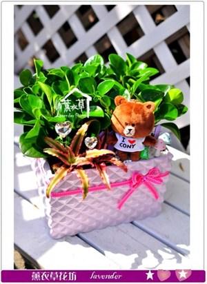 聚財樹盆栽c110113