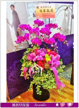 高雅蝴蝶蘭盆栽A102326